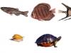 Живность Flash аквариума курсового проекта